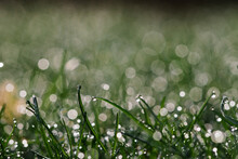 Macro Of Grass With Water Drops