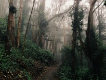 Foggy Forest Trail