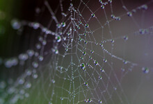 Close Up Of A Spider Web Fille...
