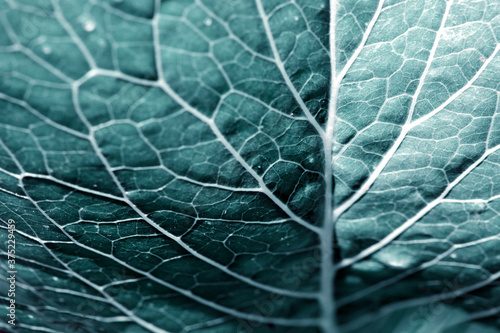 Green leaves background. Macro Leaf nature texture Canvas Print