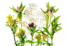 Alstroemeria Flower With Stame...