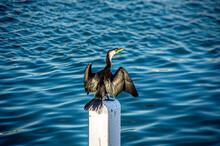 Cormorant On Pole