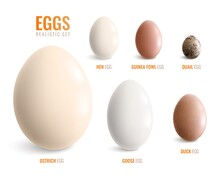 Colored Realistic Eggs Icon Set