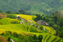 Rice Terraces In Hagiang
