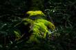 森の中の苔に日が差して