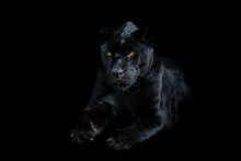 Black Panther With A Black Bac...