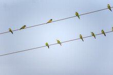 Birds On Wire A Common Urban Scene Mostly Birds Like To Sit On Wires In City Areas