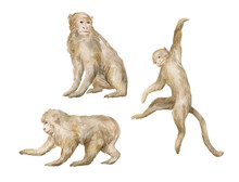 Watercolor Cute Monkeys Isloat...