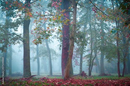 Fototapeta Nebel im Wald im Herbst