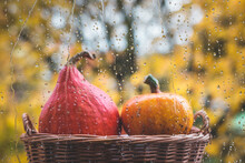 Raindrops On Window. Defocused Pumpkins As Background. Autumn Concept
