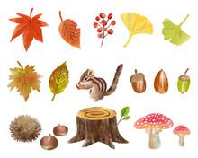 手描き水彩 りすと秋の植物イラストセット