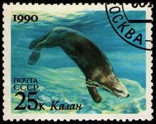 Sea Otter (Enhydra Lutris), Sea Fauna, Stamp USSR Circa 1990