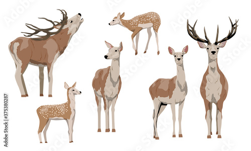 Foto Collection red deer Isolated on white background
