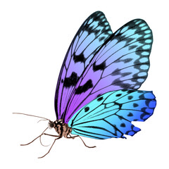 Amazing bright color butterfly isolated on white