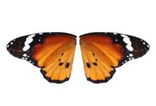 Beautiful Plain Tiger Butterfl...