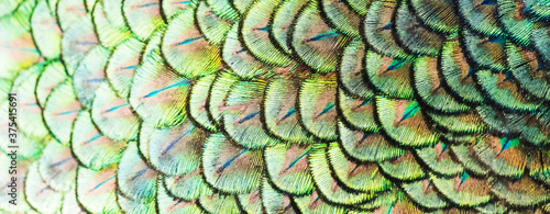 Valokuva Patterns and colors of peacock feathers