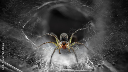 Photo macro photo of a yellow spider on its web