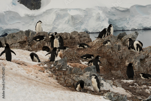 Fotografie, Obraz Penguins' colony