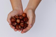 Child´s Handful Of Chestnuts
