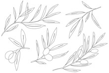 Olive Branch Engraving Vector ...