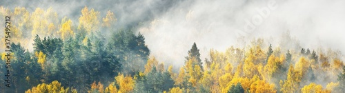 Fototapeta Breathtaking panoramic aerial view of the colorful golden mixed coniferous forest and river in a clouds of fog at sunrise