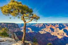 A Tree By The Edge Of The Canyon