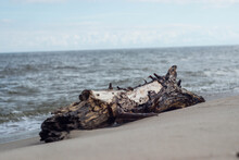 Old Trunk On A Shore Of A Beach.
