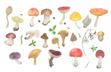 Watercolor Painting Big Set With Mushrooms And Forest Elements