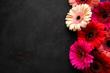 Bright Gerbera Flowers On A Black Background