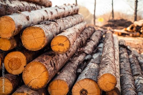 Tablou Canvas Log spruce trunks pile