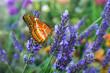 Leinwanddruck Bild Schmetterling 764