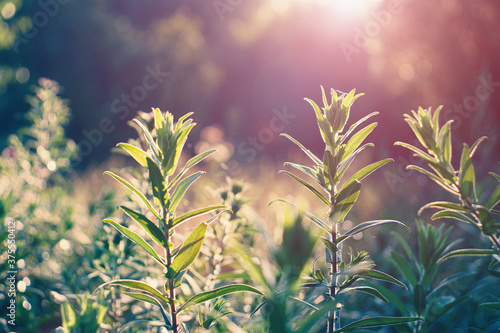 Photo Perennial aster flowers in the morning autumn sun