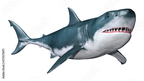 3D Rendering Shark on White Canvas Print