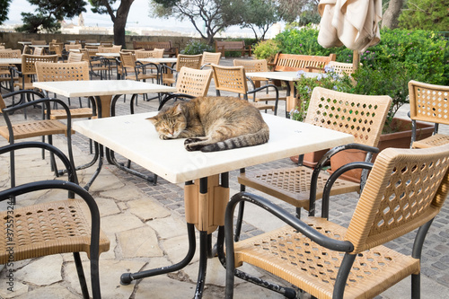 Photographie The pretty tabby cat sleeping on the table of the cafe in the upper Gardens of V