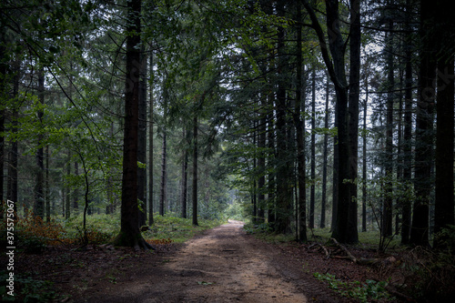 Bavarian forest with paths and fog Billede på lærred