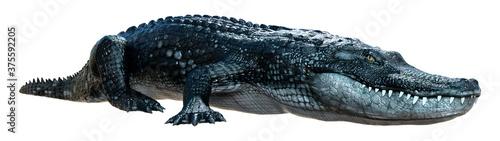 3D Rendering Black Alligator on White Fototapet