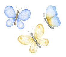 Blue And Yellow Butterflies. S...