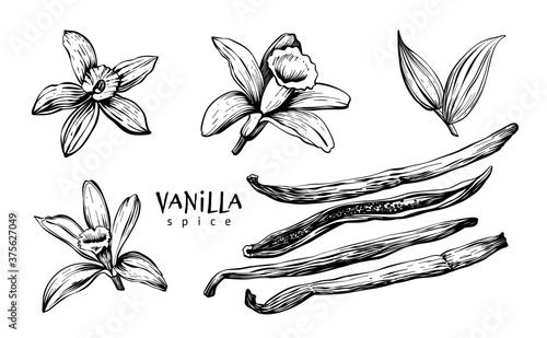 Fototapeta Vanilla flowers, leaves, pods and sticks