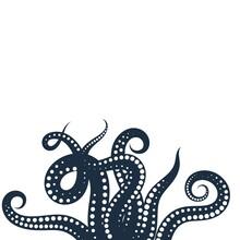 Octopus Vector Icon Illustration