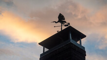 Weathervane Sculpture Of A Gre...