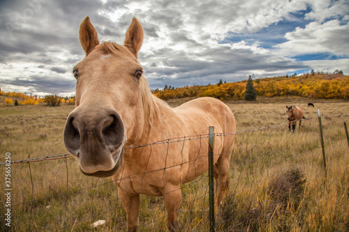 Fototapeta Funny horse in fall