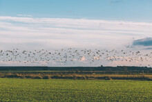 Photograph Of Migratory Birds At Sunset.