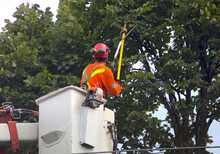 Trimming Tree In Boom Lift Nacelle Branch Cutting