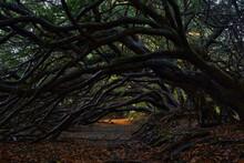 Yew Tree Tunnel On The Traquai...