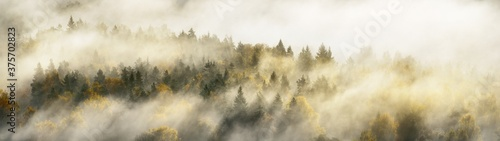 Fotografia Breathtaking panoramic aerial view of the colorful golden mixed coniferous forest and river in a clouds of fog at sunrise