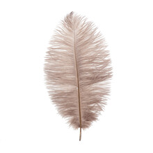 Fluffy Ostrich Feather On The ...