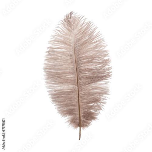 Fotografia Fluffy ostrich feather on the white background
