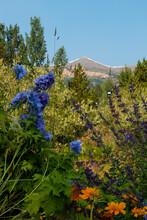 Summer Wildflowers And Mountain Peak In Breckenridge Colorado