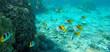 School of yellow tropical fish underwater in Bora Bora coral reef