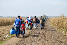 Syrian Refugees Running In Cornfield. Border Between Serbia And Croatia. Balkan Route. Migrants On Their Way To European Union In 2015. Escaping From War.